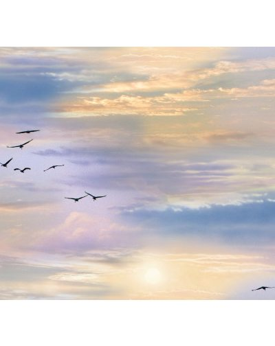 birds and sky landscape in sunrise