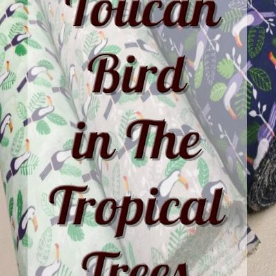 Toucan Bird in The Tropical Trees